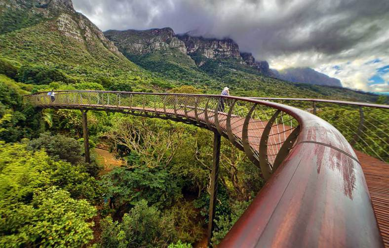 Kirstenbosch Tree Top Walkway