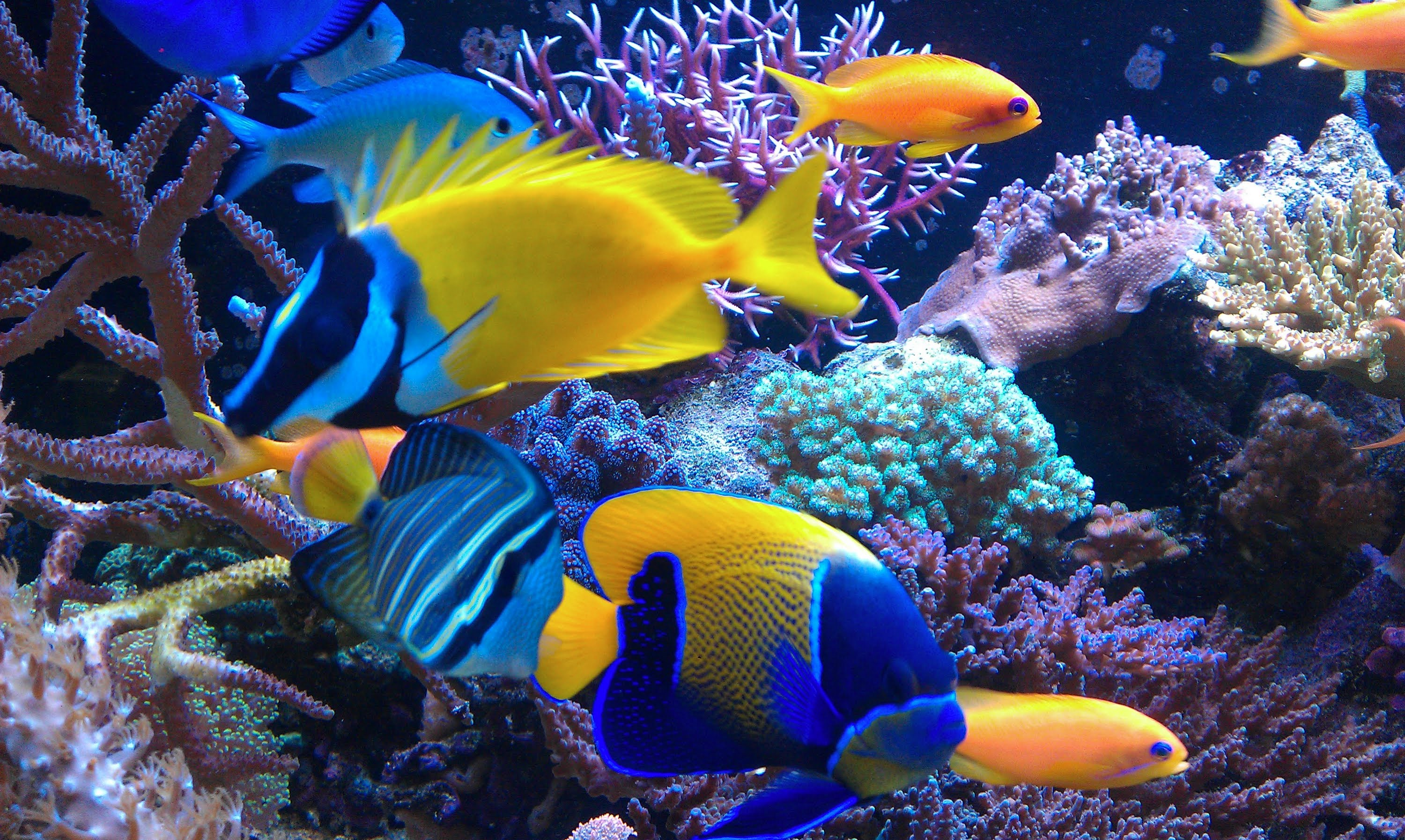 Barrier Reef Fish